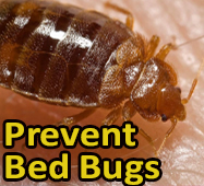 Prevent Beg Bugs image