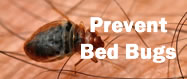 Bed Bug Info button